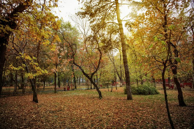 Trees in the park in the fall. Trees in autumn park in the rain stock images