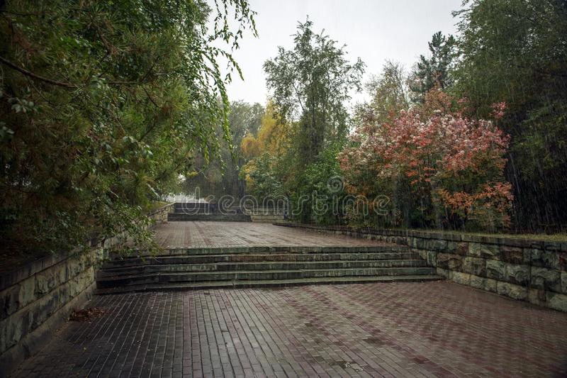 Trees in the park in the fall. Trees in autumn park in the rain royalty free stock photos