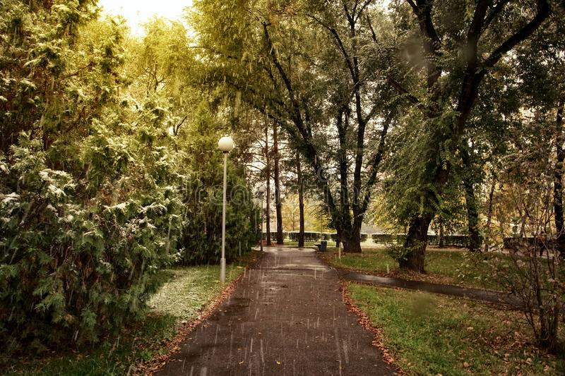 Trees in the park in the fall. Trees in autumn park in the rain royalty free stock images