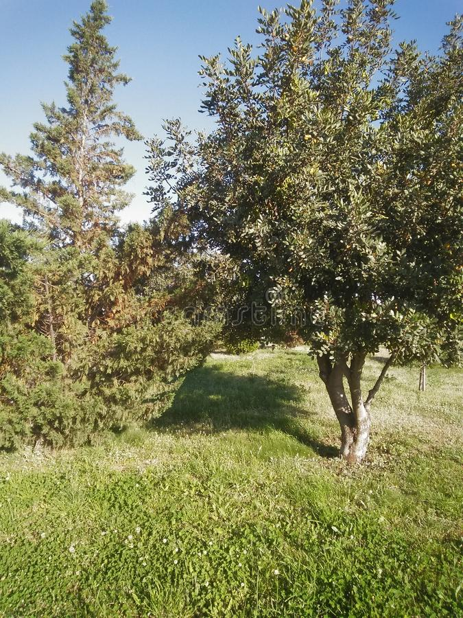 Trees in the park. Grass, nature, outdoors stock photography