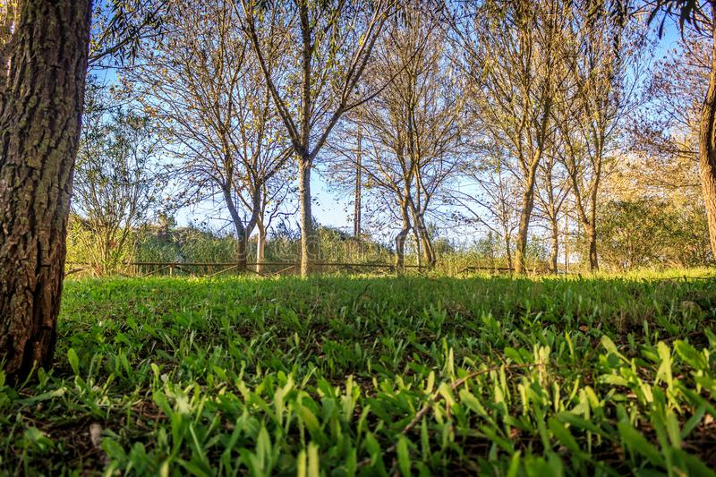 Trees in the park. Nature, sky, grass royalty free stock image