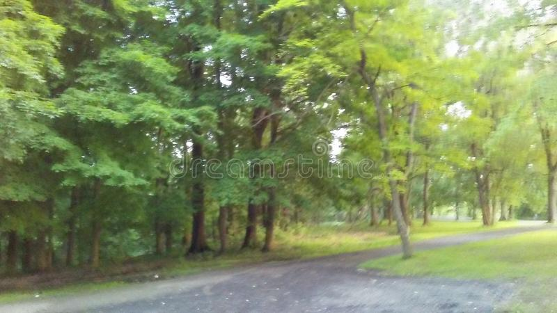 Trees in the park royalty free stock image