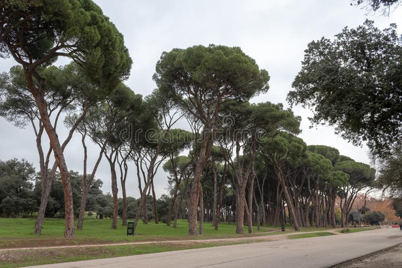 Trees in a park. Photo of trees in a park of Madrid royalty free stock photo