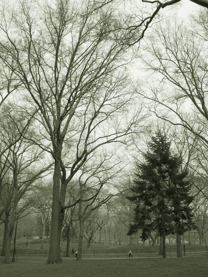 Trees in park in sepia