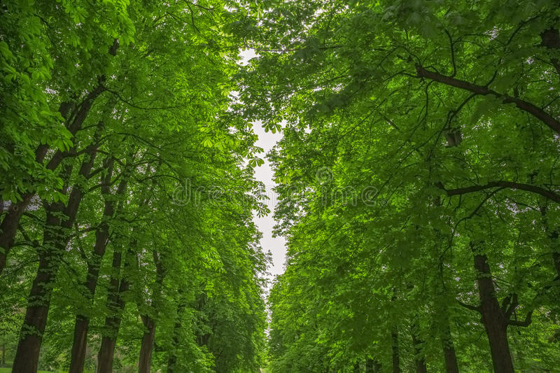 Leafy green trees. Background of leafy green trees in Talon Park in Italy stock photography