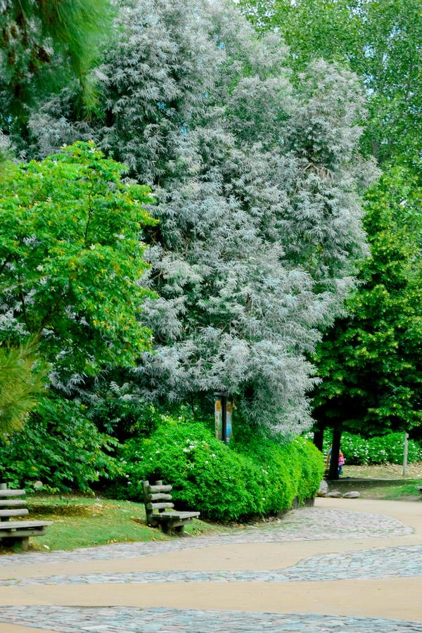 Trees in the park. In teimaken royalty free stock photography