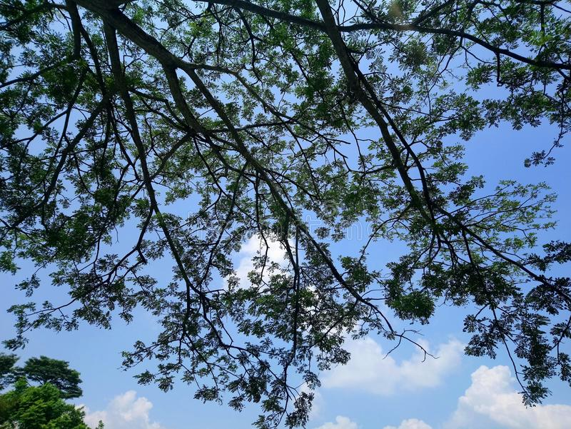 Trees at the park. Trees park green branches leaves royalty free stock photography
