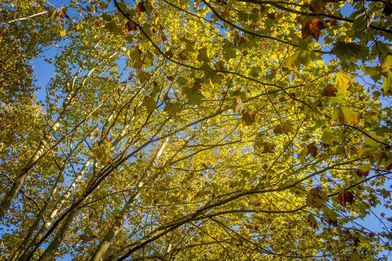 Trees in the park. Nature, sky, grass royalty free stock photography