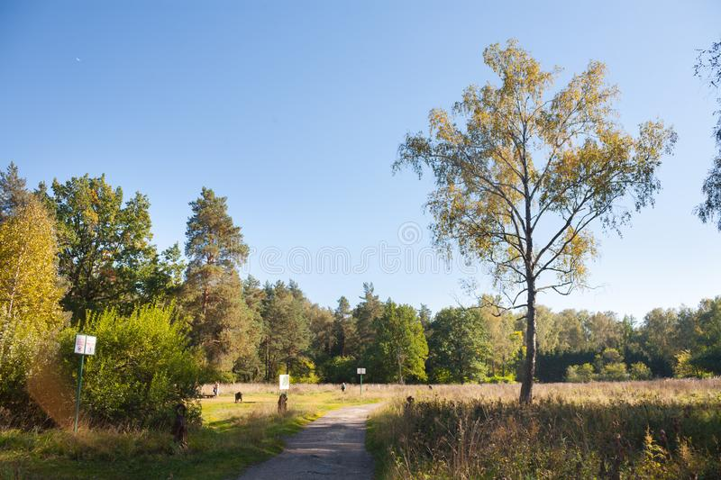 Trees, path and people 20.09.2018 stock photos