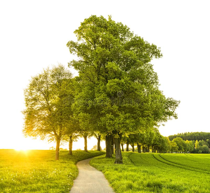 Trees With Pathway stock images