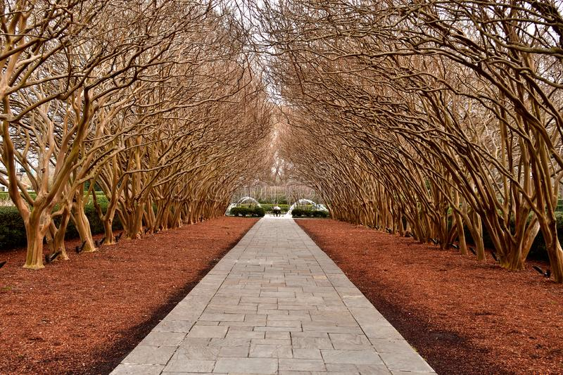 Trees on paved Pathway royalty free stock image