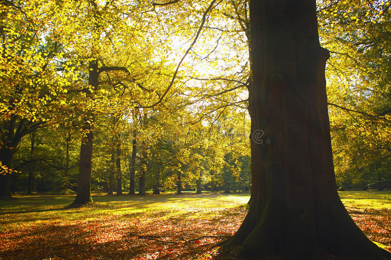 Trees in picturesque park. Scenic view of leafy green trees bathed in sunshine in picturesque park or countryside royalty free stock image
