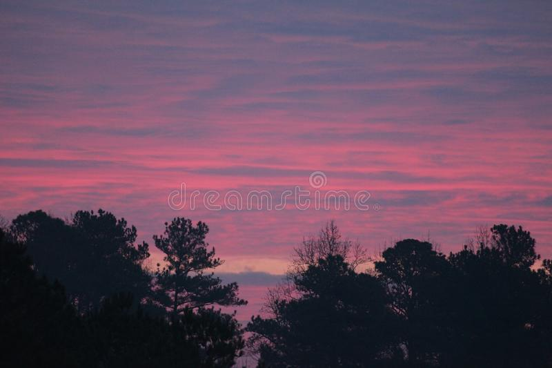 Trees with Pink and purple sunrise. Pink, and purple clouds stretching across the sky in an east coast sunrise over forest in winter royalty free stock images
