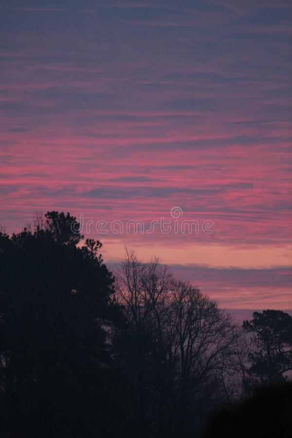 Trees with Pink and purple sunrise. Pink, and purple clouds stretching across the sky in an east coast sunrise over forest in winter. Vertical royalty free stock photos