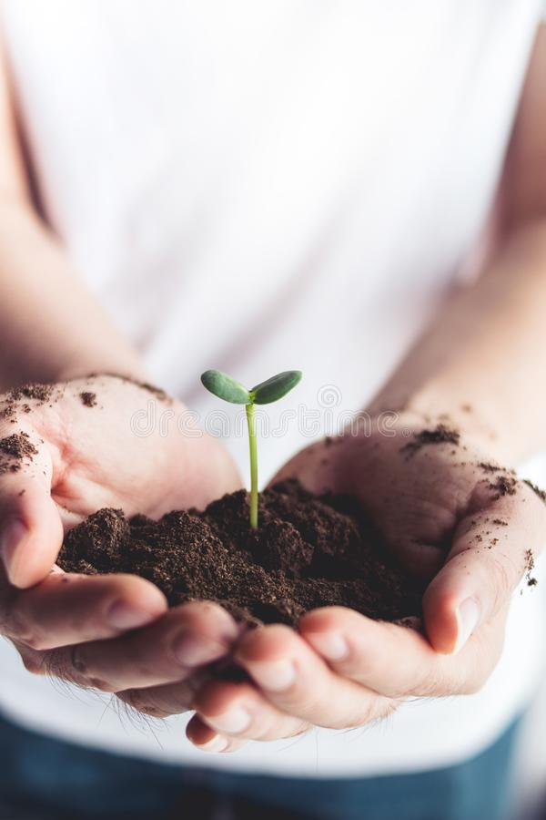 Trees plant tree, people are holding, love the world, love the nature, planting trees. Love nature royalty free stock photo