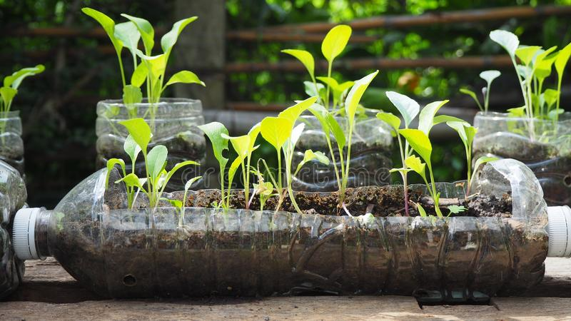 Trees are planted in recycled plastic bottles. Planted in a bottle. Plastic recycle. stock photography