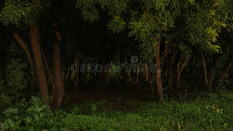Dark scary green florest entry. Trees and plants at theirs natural and raw mode full of green and wild free life at the landscape scene. scary dense dark stock image