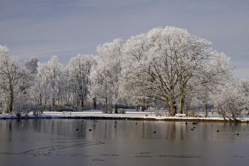Trees with pond landscape Bad Laer, Germany. Trees with pond landscape in winter, Bad Laer, spa park, Osnabruecker Land, Lower Saxony, Germany, Europe royalty free stock photography