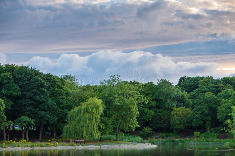 Trees And Pond At Leases Park In Newcastle, UK Stock Image ...