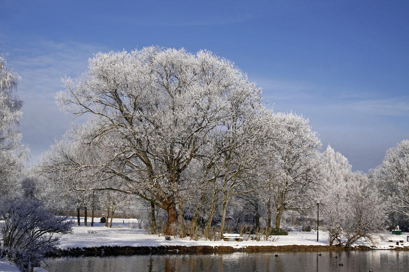 Trees with pond in winter, Lower Saxony, Germany. Trees with pond landscape in winter, Bad Laer, spa park, Osnabruecker Land, Lower Saxony, Germany, Europe royalty free stock photo