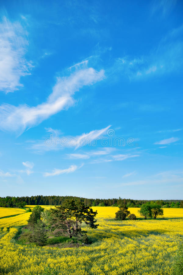 Download Trees in field stock photo. Image of field, rapeseed - 24937788
