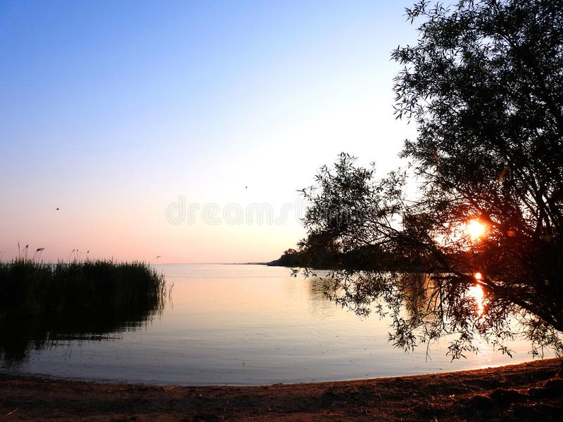Trees and Curonian spit in early morning, Lithuania. Trees and reed plants near Curonian spit in early morning in sunrise time royalty free stock photo