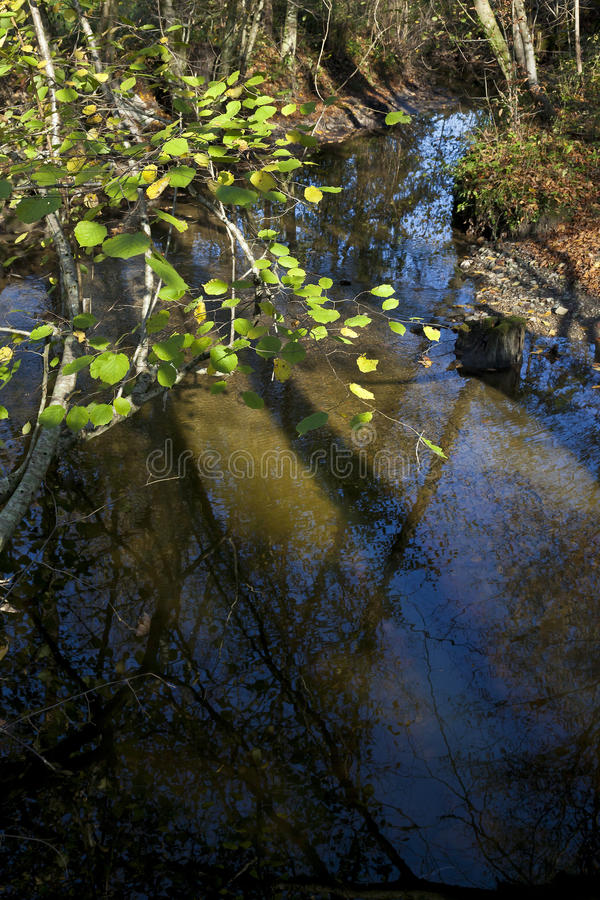Trees reflect in a river. Trees reflection in a wood near path stock photography