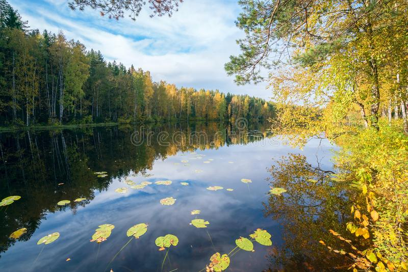 Birch with yellow leaves near the water . Autumn landscape stock image