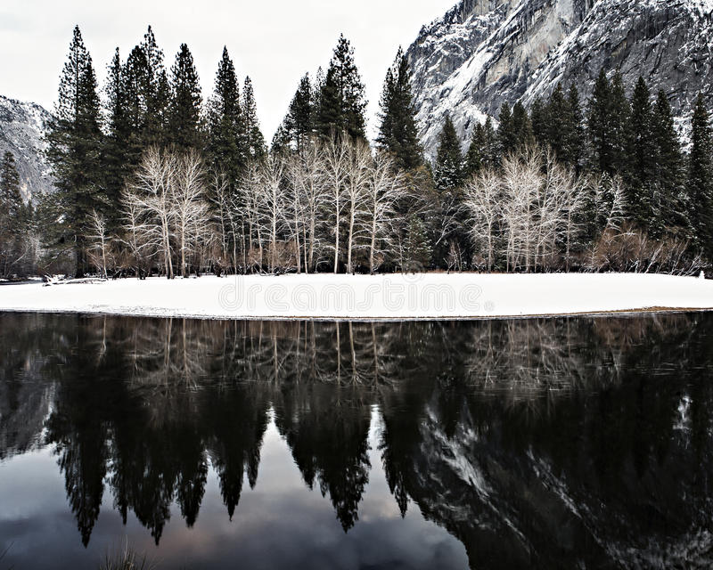 Trees reflected in the Merced river stock photos
