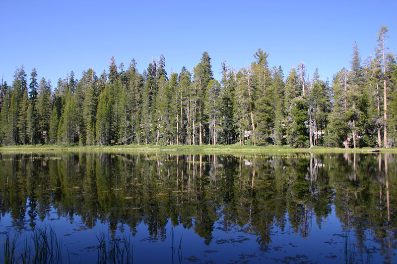 Trees reflected in Siesta Lake stock photos