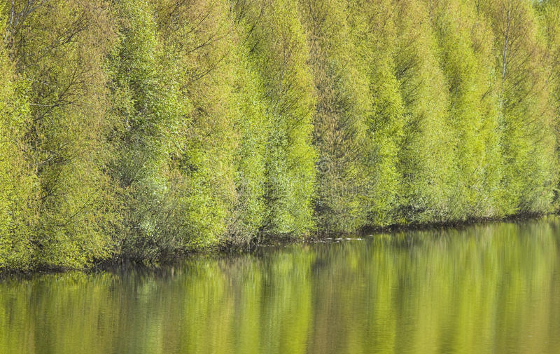 Download Trees reflected in water stock photo. Image of water - 27273268