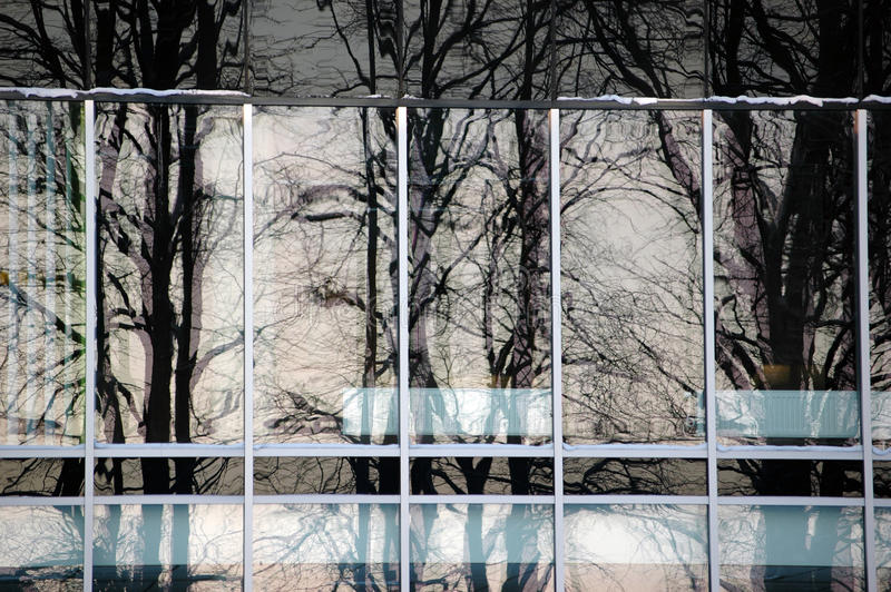 Trees reflecting in office building. Trees reflecting in modern office building royalty free stock photo