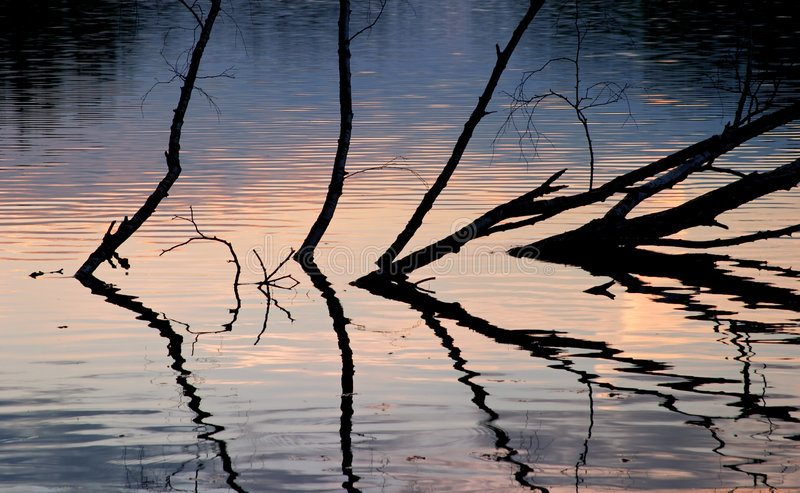 Trees reflecting on water stock photography