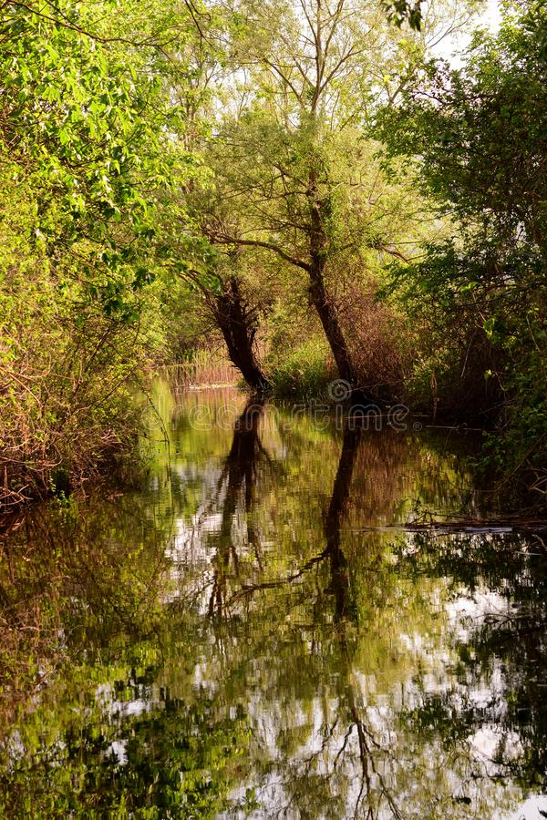 Trees reflecting in water at Hutovo Blato nature reserve. Hutovo Blato is a nature reserve and bird reserve, located in south part of Bosnia and Herzegovina. It royalty free stock images