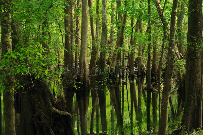 Download Trees reflecting on marsh stock image. Image of calm - 16015855
