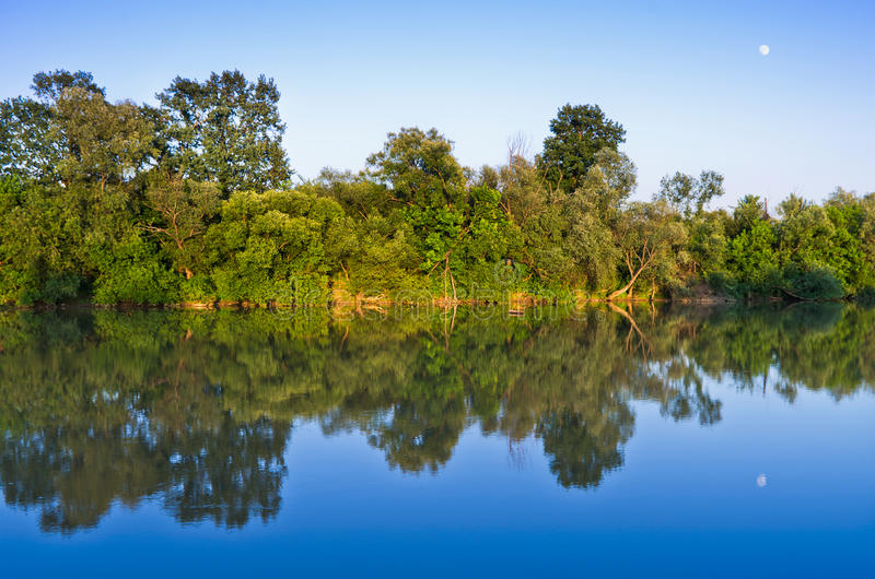 Download Trees with reflection stock photo. Image of summer, foliage - 19952100
