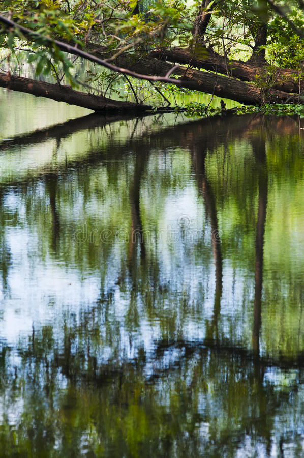 Download Trees reflection stock image. Image of water, yellow - 27113155