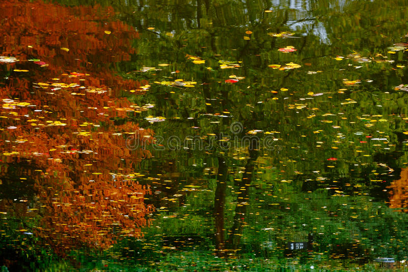 Trees reflection in water stock image