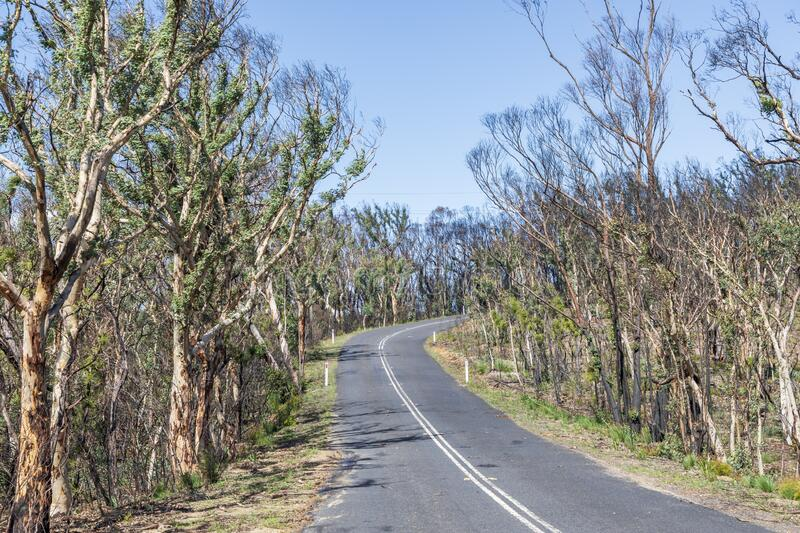 Trees regenerating in The Blue Mountains in Australia after the severe bush fires. Trees regenerating in The Blue Mountains in Australia after severe bush fires stock image
