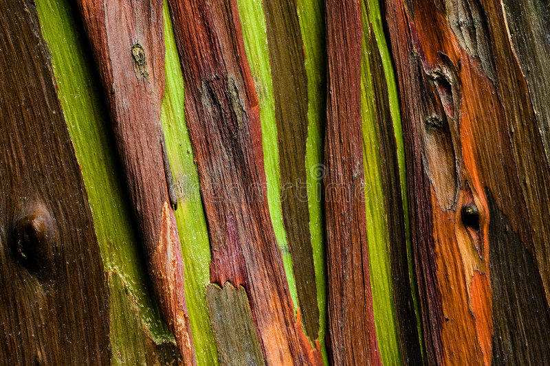 Download Trees rejoice stock image. Image of trinidad, abstract - 4796337