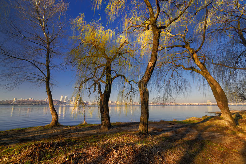Trees on the river bank III. Trees on the river bank in the morning sun. Dnepropetrovsk, Ukraine royalty free stock images