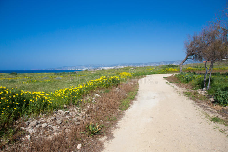 Trees and road in the meadow with yellow flowers. In the background sea and blue sky stock photo