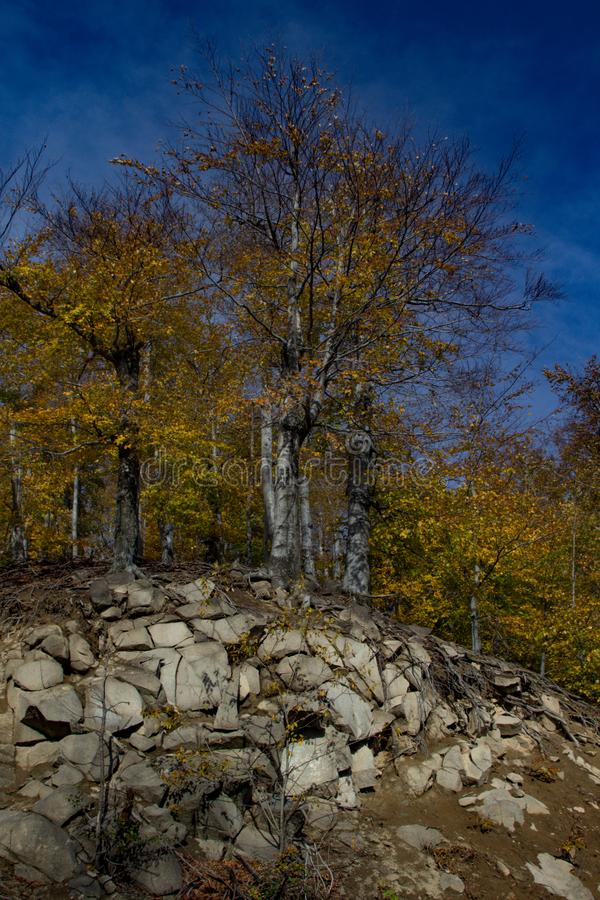 Trees on rock formation royalty free stock photos