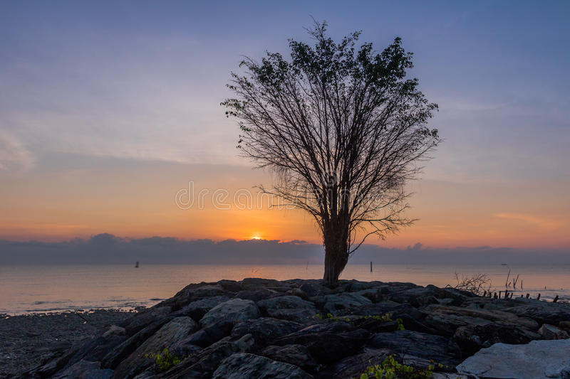 Trees on the rock near the dock. Smoke from burning forest from Indonesia. make the light of the sun can fade the sun is red round before sunset.The smoke made royalty free stock photography