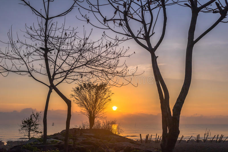 Trees on the rock near the dock. Smoke from burning forest from Indonesia. make the light of the sun can fade the sun is red round before sunset.The smoke made royalty free stock photo
