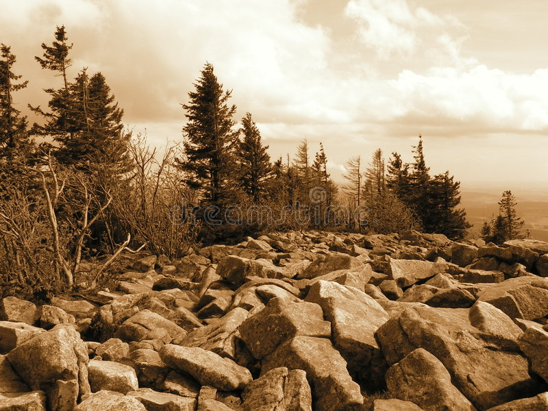 Download Trees on the Rocks stock image. Image of brown, white - 2411237