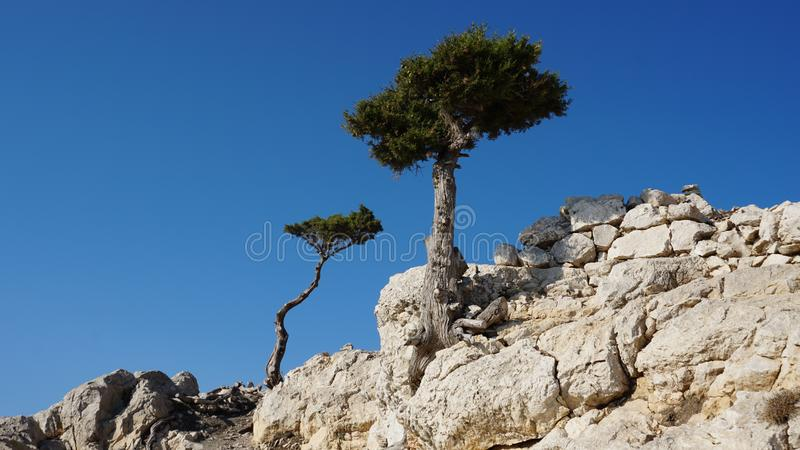 Trees on the rocks stock images