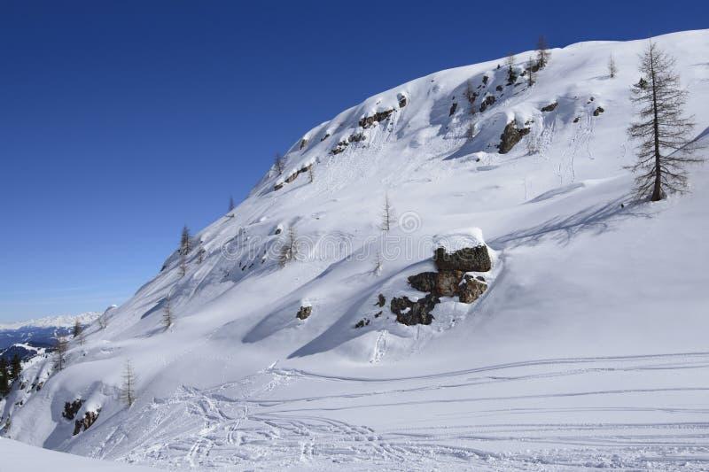 Trees and rocks on snowy slope Arabba royalty free stock photo