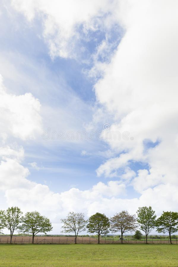 Trees in a row in spring time. Tree lined landscape with blue sky, white clouds and green grass in spring time England stock image