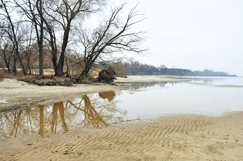 Trees on a sandy bank stock photography